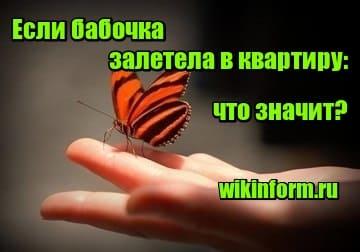 картинка если бабочка залетела в квартиру что значит