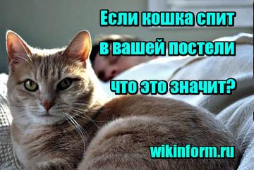 фото если кошка спит в вашей постели что это значит